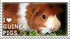 I love Guinea Pigs by WishmasterAlchemist