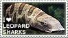I love Leopard Sharks