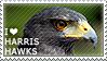 I love Harris Hawks by WishmasterAlchemist