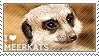 I love Meerkats by WishmasterAlchemist