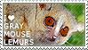 I love Gray Mouse Lemurs by WishmasterAlchemist