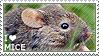 I love Mice