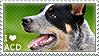 I love Australian Cattle Dogs