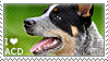 I love Australian Cattle Dogs by WishmasterAlchemist