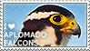 I love Aplomado Falcons by WishmasterAlchemist