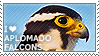 I love Aplomado Falcons by WishmasterAlchemist