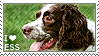I love English Springer Spaniels by WishmasterAlchemist