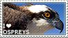 I love Ospreys