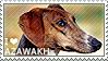 I love Azawakh by WishmasterAlchemist