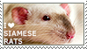 I love Siamese Rats by WishmasterAlchemist
