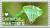 I love Chinese Mantises