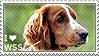 I love Welsh Springer Spaniels