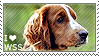 I love Welsh Springer Spaniels by WishmasterAlchemist