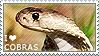 I love Cobras