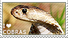 I love Cobras by WishmasterAlchemist