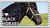 I love Black Horses