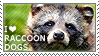 I love Raccoon Dogs by WishmasterAlchemist