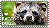 I love Raccoon Dogs by WishmasterAlchemist
