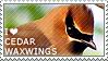 I love Cedar Waxwings