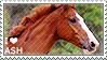 I love Australian Stock Horses
