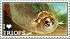 I love Triops by WishmasterAlchemist