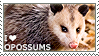I love Opossums