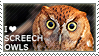 I love Screech Owls
