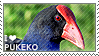 I love Pukeko by WishmasterAlchemist
