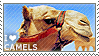 I love Camels by WishmasterAlchemist