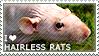 I love Hairless Rats