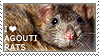 I love Agouti Rats by WishmasterAlchemist