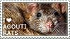 I love Agouti Rats by WishmasterAlchemist