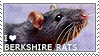 I love Berkshire Rats by WishmasterAlchemist