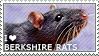I love Berkshire Rats by WishmasterAlchemist