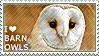 I love Barn Owls by WishmasterAlchemist