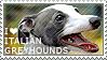 I love Italian Greyhounds by WishmasterAlchemist