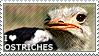 I love Ostriches