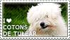 I love Cotons de Tulear by WishmasterAlchemist