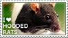 I love Hooded Rats