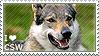 I love Czechoslovakian Wolfdogs