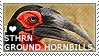 I love Southern Ground Hornbills by WishmasterAlchemist