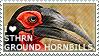 I love Southern Ground Hornbills by WishmasterAlchemist