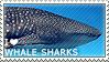 I love Whale Sharks by WishmasterAlchemist
