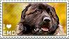 I love Estrela Mountain Dogs by WishmasterAlchemist