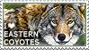 I love Eastern Coyotes