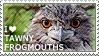 I love Tawny Frogmouths by WishmasterAlchemist