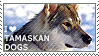 I love Tamaskan Dogs by WishmasterAlchemist