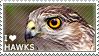 I love Hawks