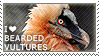 I love Bearded Vultures by WishmasterAlchemist