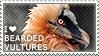 I love Bearded Vultures